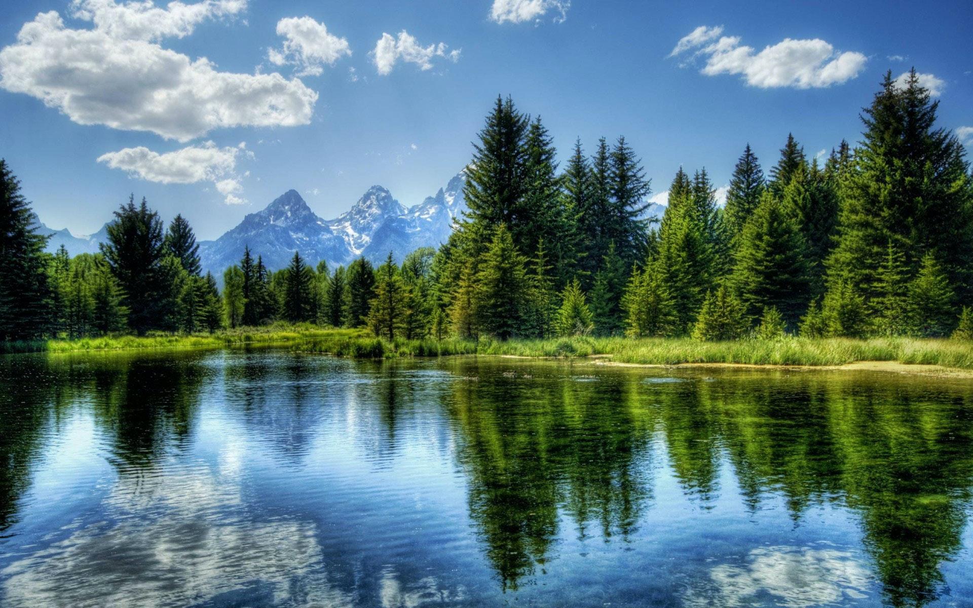 Medio Ambiente Environment